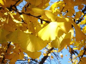 【荷塘】树最美的时候(散文)